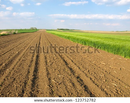 plowed field and green wheat