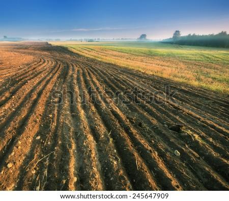 Plowed field landscape at sunrise #245647909
