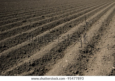 Plowed ground, with brown stones and loose soil