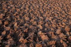 Plowed soil in Isaan farm, Thailand