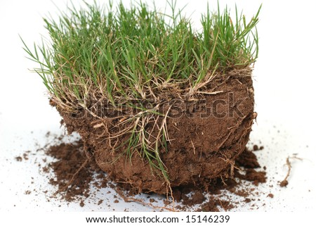 Plug of grass and dirt isolated on white background.