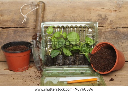 Plug plants in a plastic container with pots a garden trowel and labels on a wooden potting bench