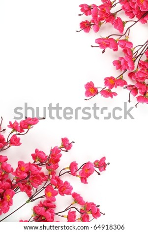 Plum Blossom Isolated on White Background