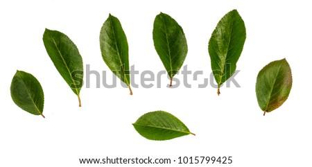 Plum leaves, set leaves, leaves on white background #1015799425