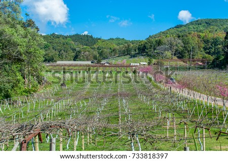 Plum tree field in autumn.