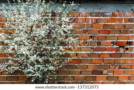 Plum trees blooming in early spring - stock photo