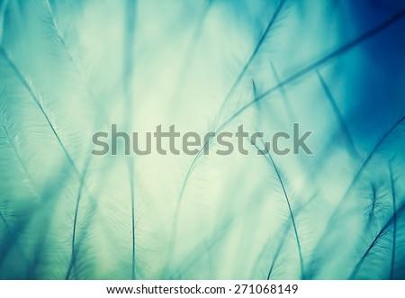 plumage background of bird closeup