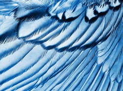 plumage background of bird closeup, x-ray effect