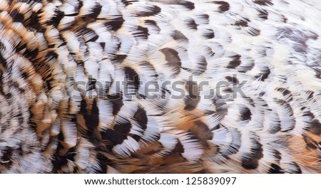 plumage of a hazel grouse bird close up, forest pattern