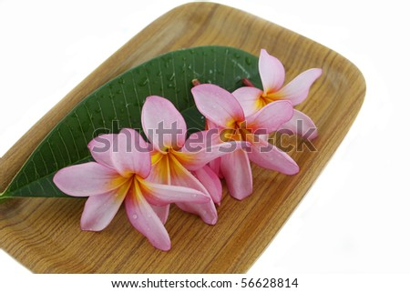 plumeria flower with leaf on wood tray