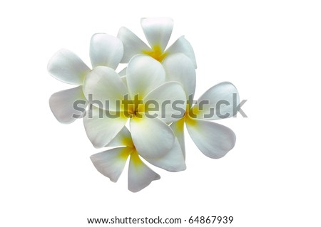 Plumeria flowers several, white flowers