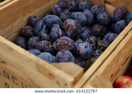 Plums in a crate #614122787