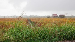 Po Delta Park in Porto Viro, Veneto, Italy: landscape of the countryside in a cloudy day with a soybean field, an old farmhouse and reeds