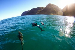 pod of dolphin swim next to the boat off the napali coast of west kauai in the beautiful clear green blue water while the sun shines through the cracks of the mountain cliffs