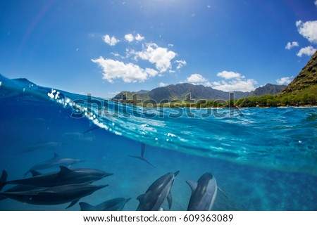 Pod of dolphins traveling along shoreline in blue ocean water. Split half-water seascape with green mountains on background #609363089
