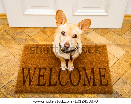 podenco dog waiting for owner to play  and go for a walk on door mat ,behind home door entrance and welcome sign #1012453870