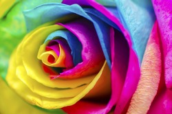 Poetic Colorful Rose