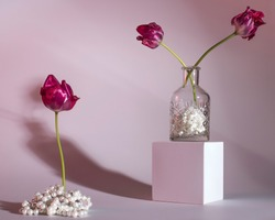 Poetic still life of pink flowers blossoming out of pearls, having a soft light coming from the right side