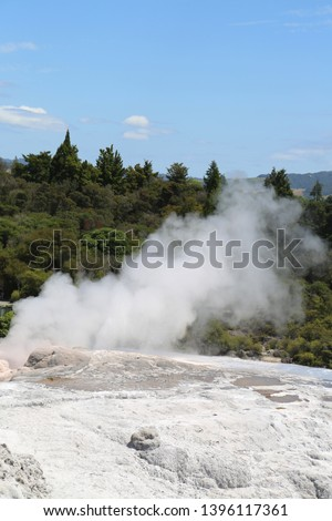 Pohutu Geyser in Te Puia National Park, Rotorua, New Zealand. It is the largest active geyser in the southern hemisphere #1396117361