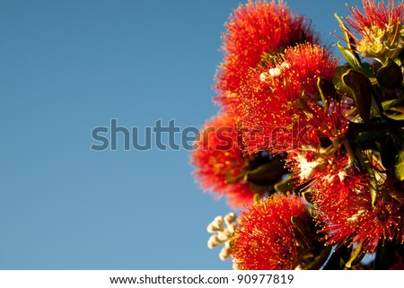 Pohutukawa blooms against blue sky.