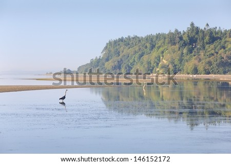 Point Roberts Dawn, Washington State. Herons feed in the shallow water of Boundary Bay at low tide in Point Roberts, Washington State, USA.