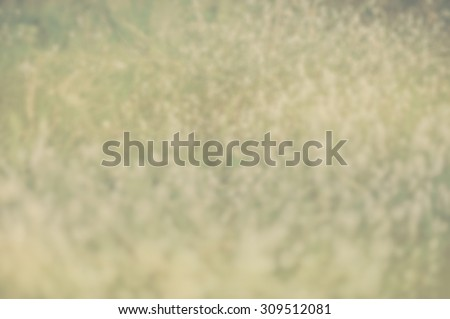 Point Round points small round blur ivory reliefs color background wall paper abstract defocuse.