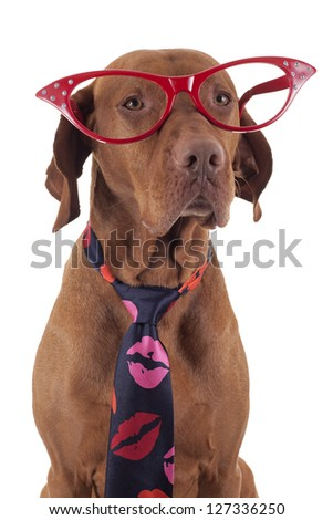 pointer dog wearing red oversize glasses and neck tie decorated with kisses