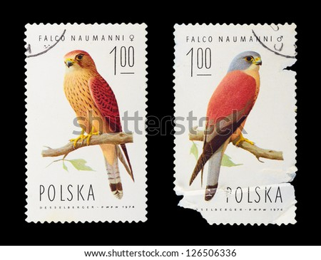 POLAND - CIRCA 1974: A set of postage stamps printed in POLAND shows parrots, series, circa 1974