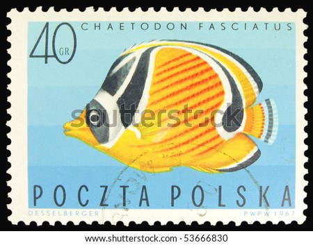 POLAND - CIRCA 1967: A stamp printed in Poland showing Red Sea Raccoon Butterflyfish, circa 1967