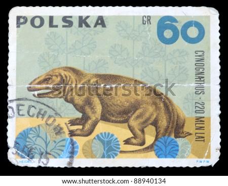 "POLAND - CIRCA 1966: A stamp printed in Poland shows animal with the inscription ""Cynognathus 220 million years"", series , circa 1966"