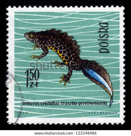 POLAND - CIRCA 1963: A stamp printed in Poland shows crested newt, series devoted to reptiles and amphibians, circa 1963