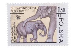 POLAND - CIRCA 1978: A stamp printed in Poland shows Elephant mother and baby, circa 1978