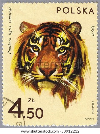 POLAND - CIRCA 1972: A stamp printed in Poland shows tiger, series is devoted to animal zoo, circa 1972