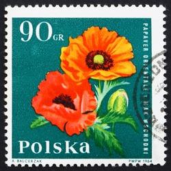 POLAND - CIRCA 1964: a stamp printed in the Poland shows Oriental Poppy, Garden Flower, circa 1964