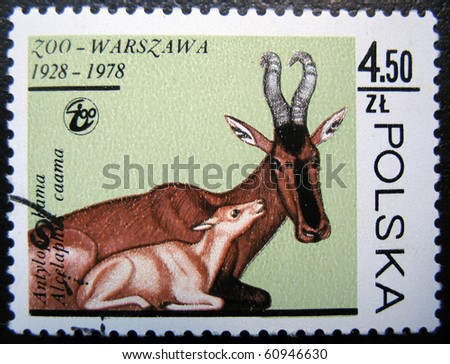 POLAND - CIRCA 1978: stamp printed by Poland, shows Antelope in zoo, circa 1978.