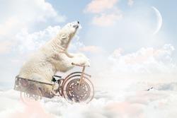 Polar bear above the clouds