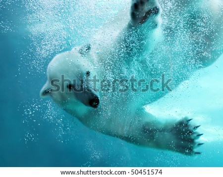 stock-photo-polar-bear-attacking-underwater-with-full-paw-blow-details-showing-the-extended-claws-webbed-50451574.jpg