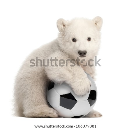Polar bear cub, Ursus maritimus, 3 months old, with football sitting against white background