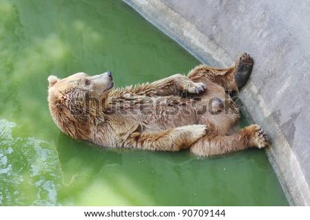 polar bear in the zoo,polar bear in the water.