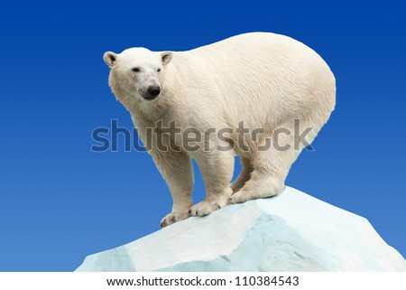 polar bear in wildness area against blue sky