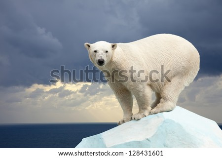polar bear in wildness area against sea landscape - stock photo