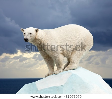 polar bear in wildness area against sea landscape