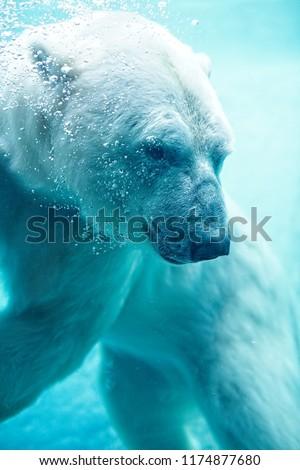 Stock Photo Polar Bear Underwater With Bubbles