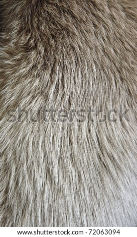 Polar fox fur texture