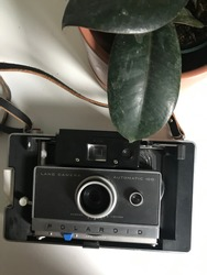Polaroid camera and rubber plant