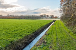 Polder landscape in the Netherlands with a diagonal ditch. In the background is the field of a tree nursery. It is autumn now.