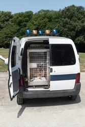 police car for dog training or paw patrol