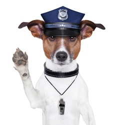 police dog asking to stop with cap