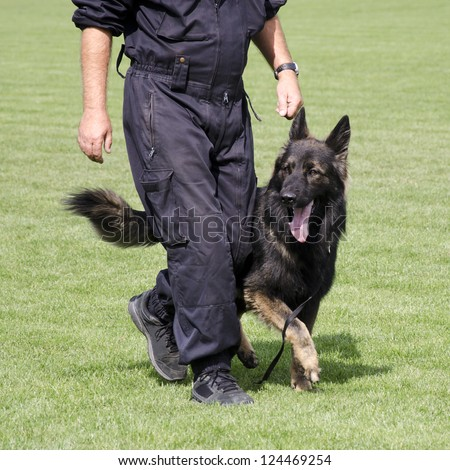 Police dog, German Shepard, walking by the leg of a male officer during a training session.