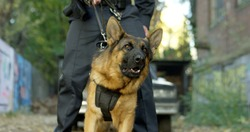 Police officer with his german shepherd dog, patrol car in the background.